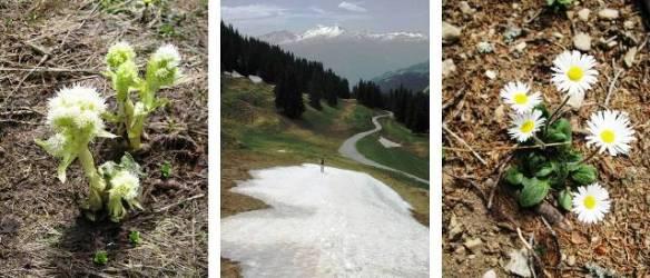 Hiking in Lenzerheide, Switzerland