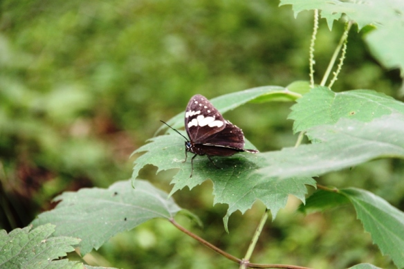 Anji Bamboo Forest - Butterfly