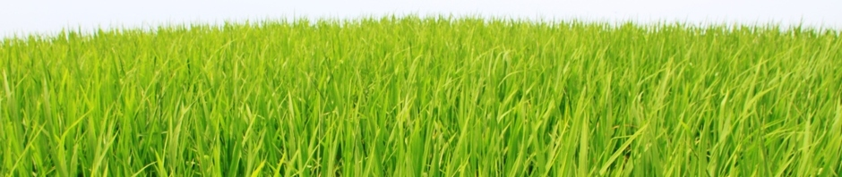 China - rice field header