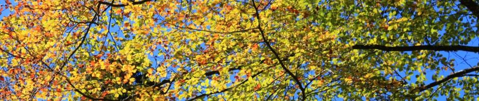 header-autumn-hiking-in-switzerland