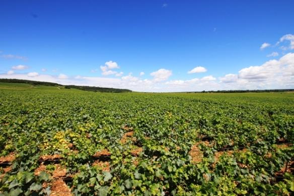 Vineyards in Vosne-Romanee