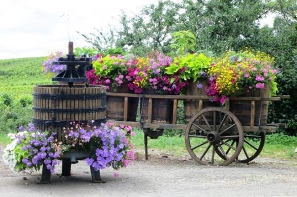 Beautiful flowers in Riquewihr, France